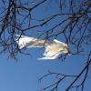 В ближайшие сутки в омском регионе будет сильный ветер