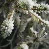 К концу рабочей недели в Омской области похолодает до -33