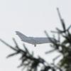 Самолеты, не попавшие в Омск из-за тумана, возвращаются из Тюмени и Новосибирска