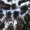 Состояние заказника «Озеро Линёво» улучшилось