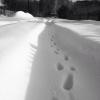 Устанавливается личность мужчины, замерзшего в Омском районе