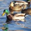 Охотники Омской области могут помочь сохранить природный баланс