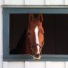 В Омской области шторм убил 11 лошадей