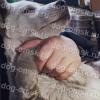В подъезде Омска нашли трехмесячного щенка с оторванной лапой