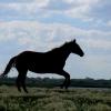 Замерзшие в Оше лошади извлечены из реки