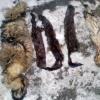 В Омской области поймали вора шкурок пушных животных