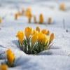 Накануне 8 марта в Омской области ожидается плюсовая температура