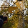 В Омскую область придет бабье лето