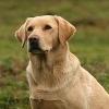 Почти месяц омич продержал собаку в машине в роли сигнализации