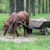 Жительница Омской области отсудила у водителя повозки с лошадью 35 тысяч рублей