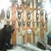 В Омской области задержали браконьера до начала охотничьего сезона