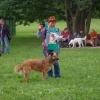 «Дворяне» померились крутизной. В Омске прошла выставка беспородных собак «Крутой дворянин - 2013»
