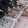 Омичи могут купить дешевую рыбу из Тевриза