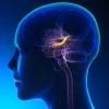 Ученые разработали протез памяти для человека