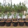 Семья молодых предпринимателей подарила омскому парку 300 кедров