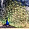 Большереченский зоопарк готовит праздник ко Дню защиты детей