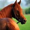 Очаг анемии лошадей обнаружен в Кировском округе Омска