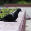 Омский суд ограничил свободу омичу, убившему голубя на глазах у детей