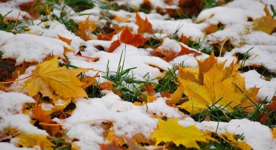 процедуры 1-ый снег в моем городе вновь 1-ый снег вам вместе