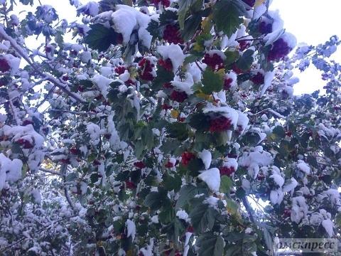 Ночной снегопад вОмске побил 60-летний рекорд
