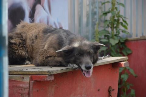 Омский приют для животных выселяют из-за долга