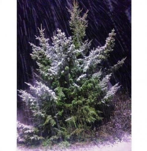 Омск завалило снегом
