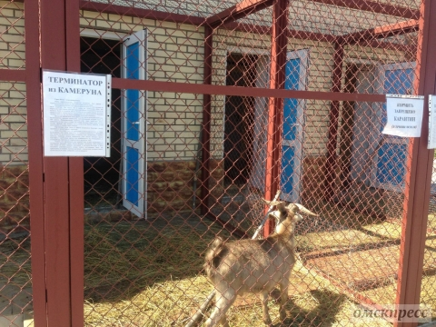 Мини-зоопарк в «Птичьей гавани» перешел на зимнее время