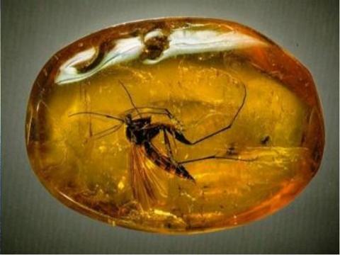 Омичей приглашают заглянуть в фасетчатые глаза древних насекомых