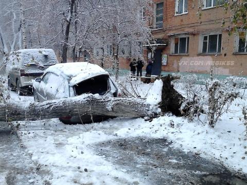 В Омске упавшее из-за метели дерево раздавило автомобиль