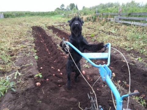 Пёс из Омска попал в британскую газету