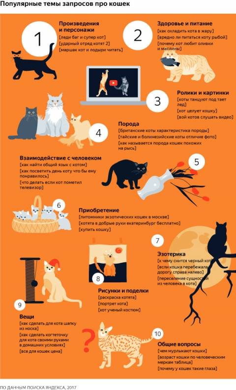 За два месяца омичи спросили в интернете про кошек 245 тысяч раз