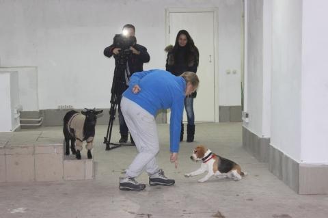 Омский центр зоотерапии «Дверь в лето» бесплатно получил помещение для реабилитации детей-инвалидов