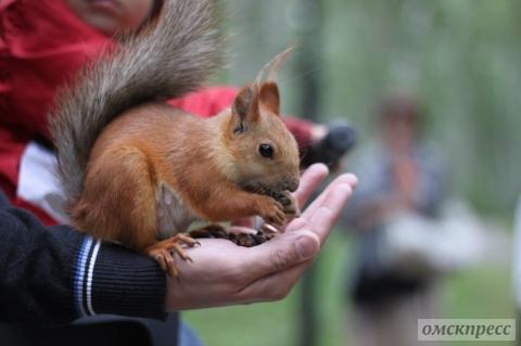 Роспотребнадзр опроверг информацию о требованиях истребить белок в омском парке