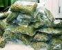Сеть наркотрафика свернула милиция