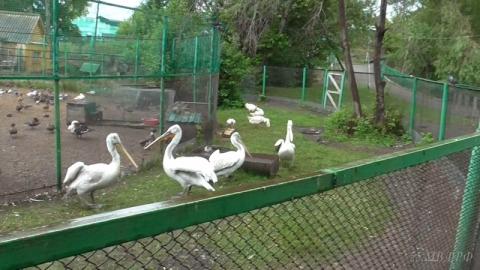 Ночью в Большереченском зоопарке убили трех редких птиц