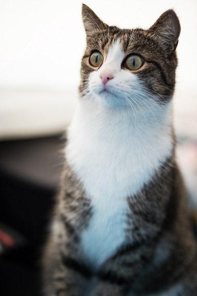 Планетарий просит омичей помочь в поисках астрономической кошки