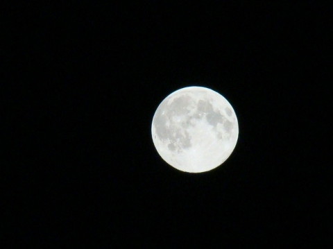 Сегодня ночью омичи наблюдали огромную луну