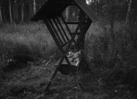 В Омской области появились фотоловушки