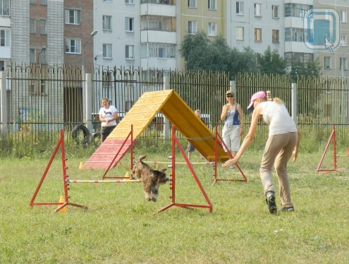 Кинологи Сибири показали свое мастерство