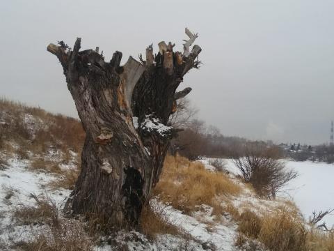 Под Омском местный житель самовольно спиливает деревья на берегу реки