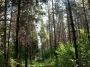 В лесу потерялся ребенок