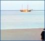 В океане – безопаснее…