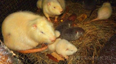 В Большереченском зоопарке родились крольчата и малыши нутрии