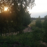 В лесах Омской области заблудились подростки