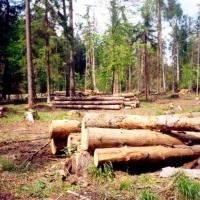 В Омской области незаконно вырубили лес на 38 миллионов