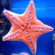 Раковина-убийца со дна морского