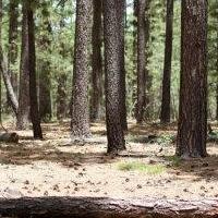 Более 50 человек искали пропавшую в лесу пожилую омичку