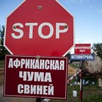 Из-за чумы свиней на трассе Новосибирск – Омск появятся посты