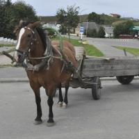 Под Омском из-за аварии конь влетел копытами в кабину Toyota Corolla