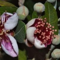 В Омске из зимней спячки выходят экзотические растения